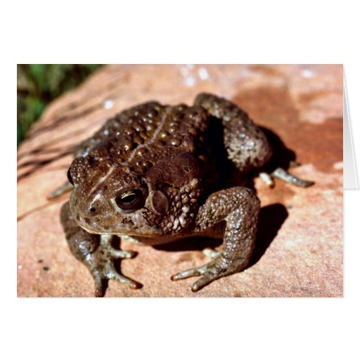 Woodhouse Toad Greeting Card