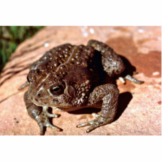 Woodhouse Toad Photo Cut Outs