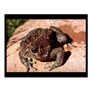 Woodhouse Toad Postcard