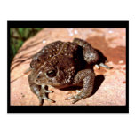 Woodhouse Toad Postcards
