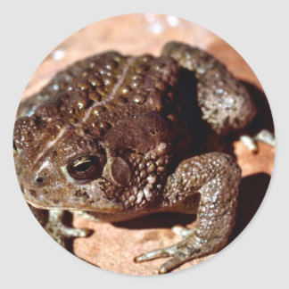 Woodhouse Toad Classic Round Sticker