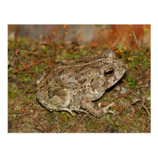 Woodhouses Toad Postcard