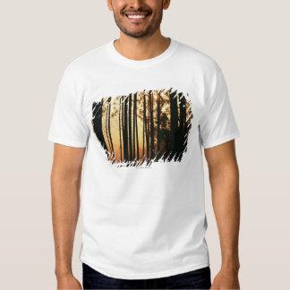 Woodland and sunrise shirt