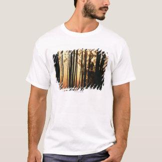 Woodland and sunrise T-Shirt