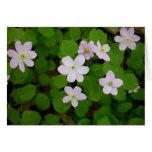 Woodland Anemones Card