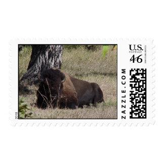 Woodland Bison Stamp