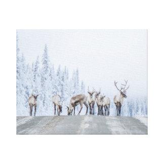 Woodland Caribou Canvas Print