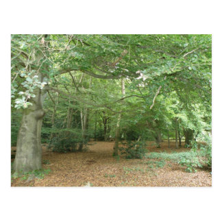 Woodland Clearing Postcard