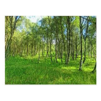 Woodland Derbyshire Postcard