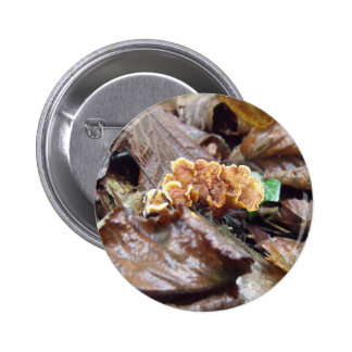 Woodland Fungus On Branch Pinback Button