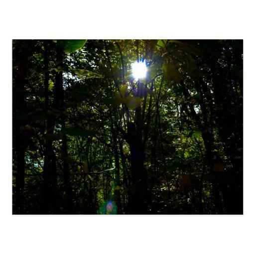 Woodland glow postcard