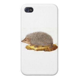 Woodland Hedgehog iPhone 4 Cover
