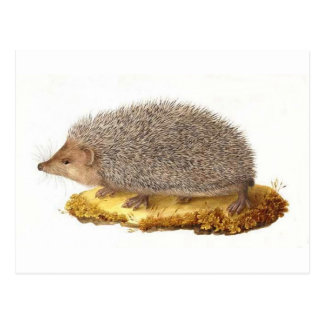 Woodland Hedgehog Postcard