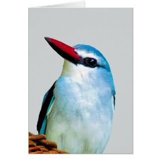 Woodland Kingfisher birds Card