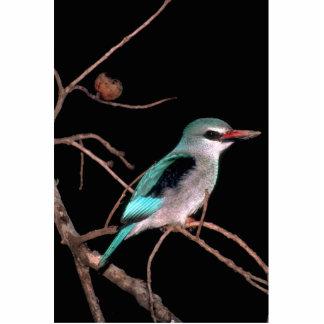 Woodland kingfisher, Mara River Camp, Kenya Photo Cutout