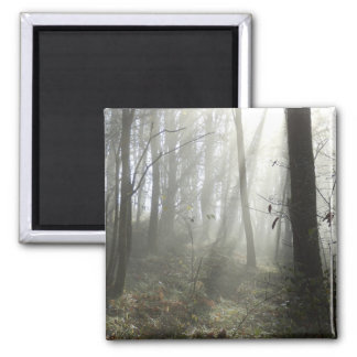 Woodland Morning Mist Square Magnet