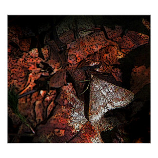 Woodland Moth Posters