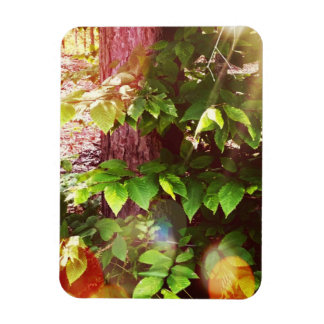 """Woodland Mystics in Boothbay 3""""x4"""" Photo Magnet"""