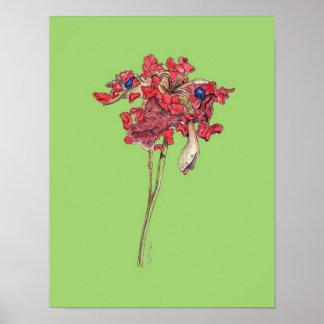 Woodland Peony Seed Pod (Paeonia obovata) Poster