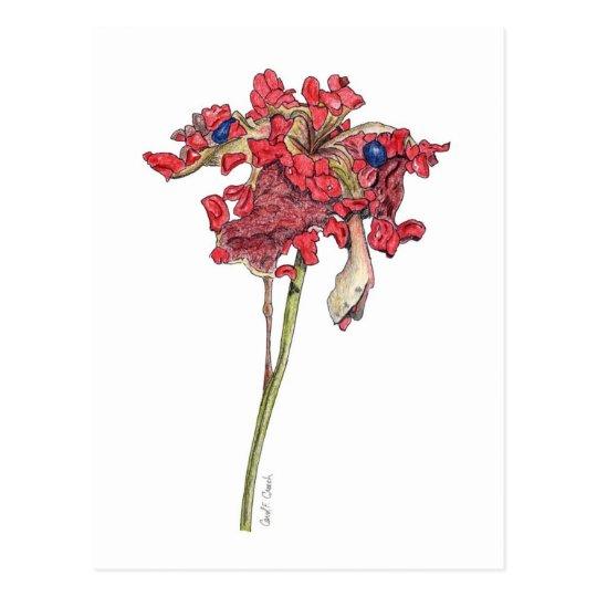 Woodland Peony Seed Pod Postcard