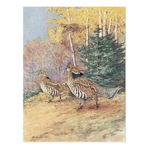 Woodland Ruffed Grouse Postcard