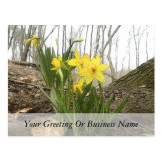 Woodland Scene - Daffodils Postcards