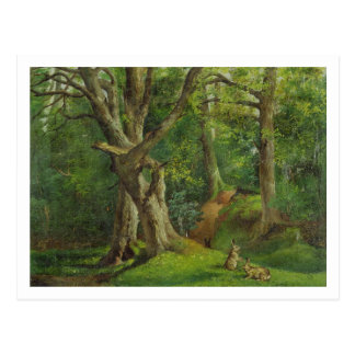 Woodland Scene with Rabbits, 1862 (oil on canvas) Postcard