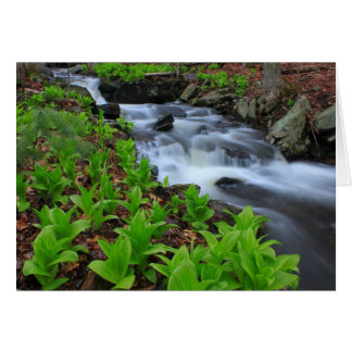 Woodland Stream and False Hellabore Wildflowers Card