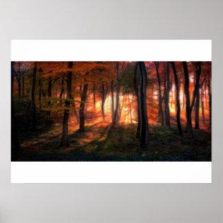 Woodland Sunrise Poster