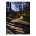 Woodland Trail And Bridge poster print / canvas print
