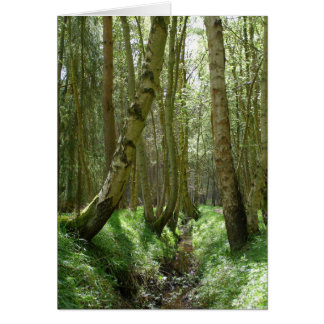 Woodland trees - greeting cards