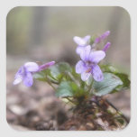 Woodland Violet Square Sticker