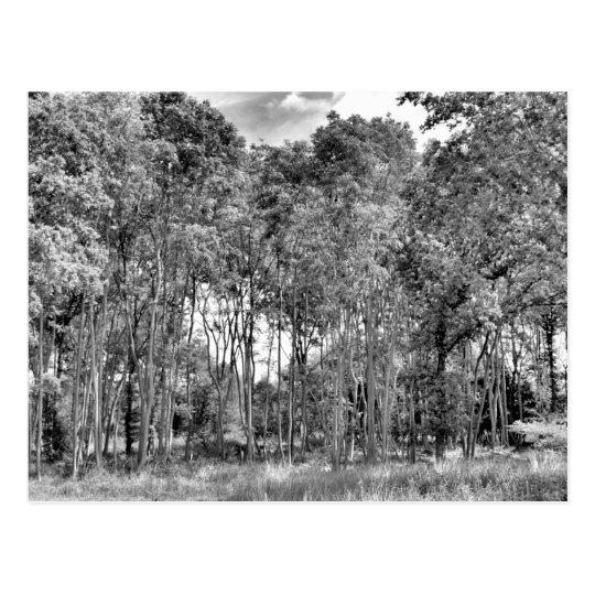 Woodland Walk Postcard
