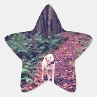 Woodland Walk Star Sticker