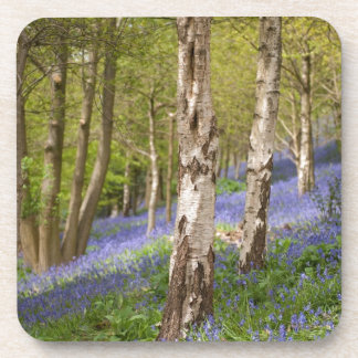Woodlands Drink Coasters
