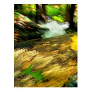Woodlands Postcard