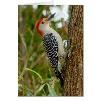 Woodpecker Bird Card