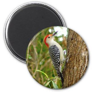Woodpecker Bird Magnet