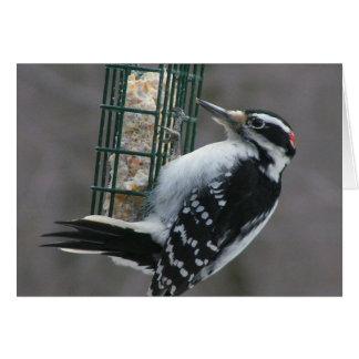 Woodpecker Birthday Card