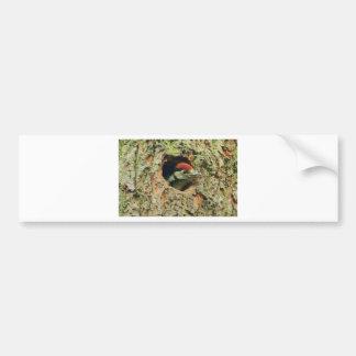 Woodpecker Car Bumper Sticker