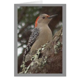 Woodpecker Card