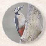Woodpecker Drink Coaster