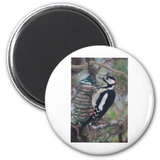 Woodpecker eating 2 inch round magnet