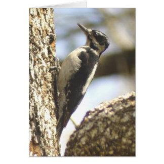 Woodpecker humor Card