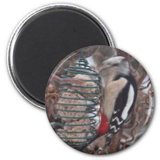 Woodpecker in Action 2 Inch Round Magnet