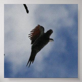 Woodpecker In Flight Poster
