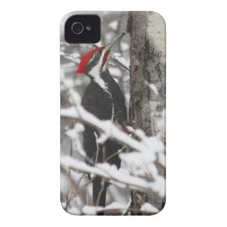 Woodpecker - iPhone 4 Case