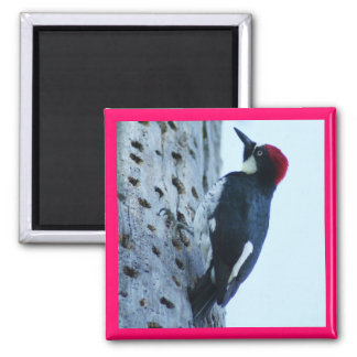 Woodpecker Fridge Magnet