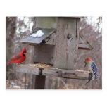 Woodpecker&Male Cardinal Postcards