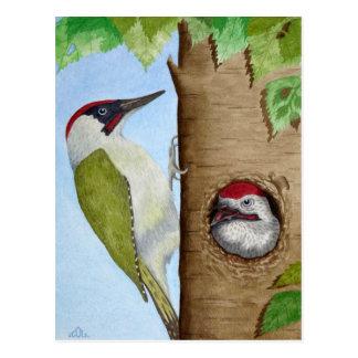Woodpecker on a tree postcard